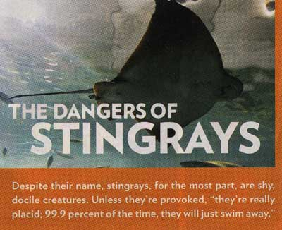 The Dangers of Stingrays
