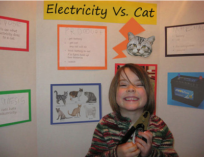 electricity-vs-cat.jpg
