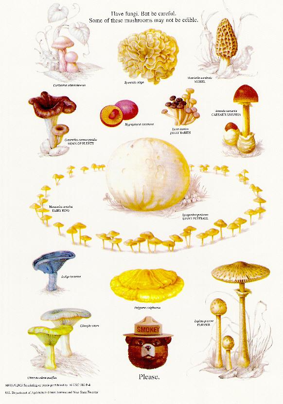 smokey fungi